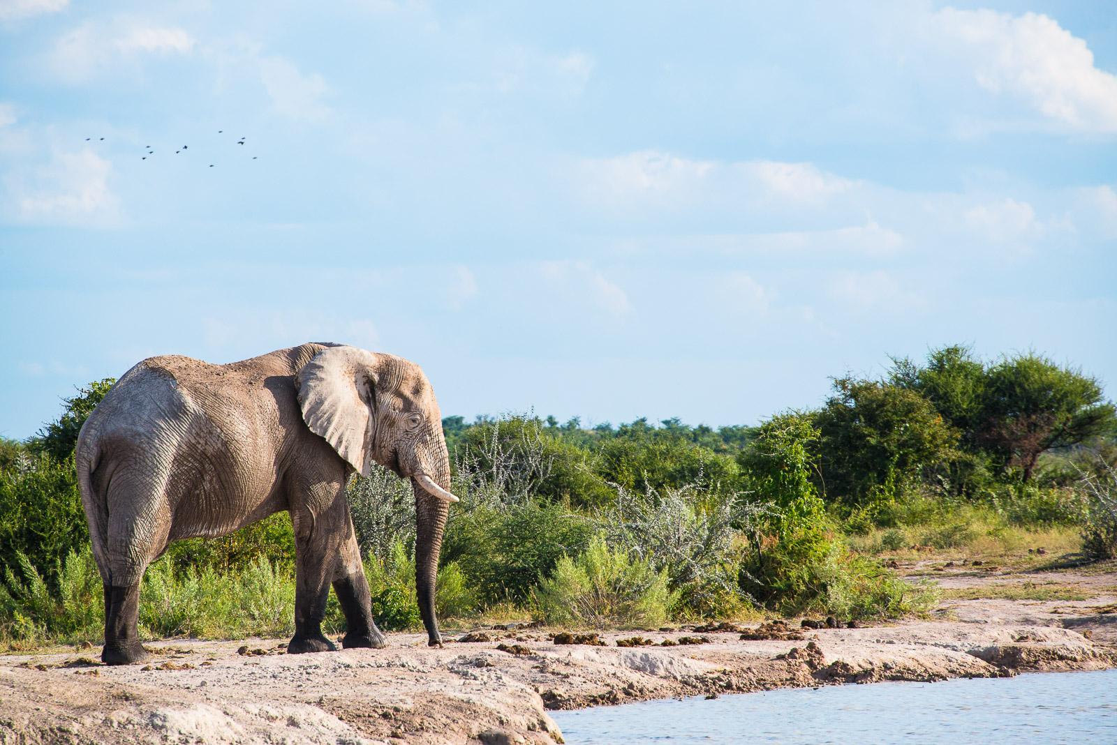Nxai Pan, Botswana